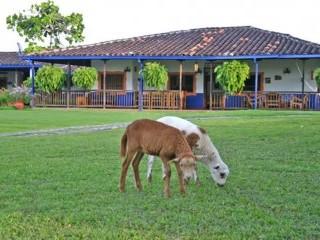 Animales domesticos en el jardin fincaturisticalaholandaquindio com